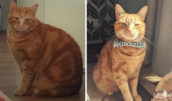 37 impressionantes transformações de perda de peso de gato 30