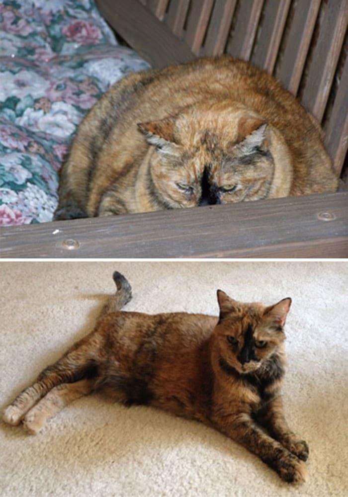 37 impressionantes transformações de perda de peso de gato 33