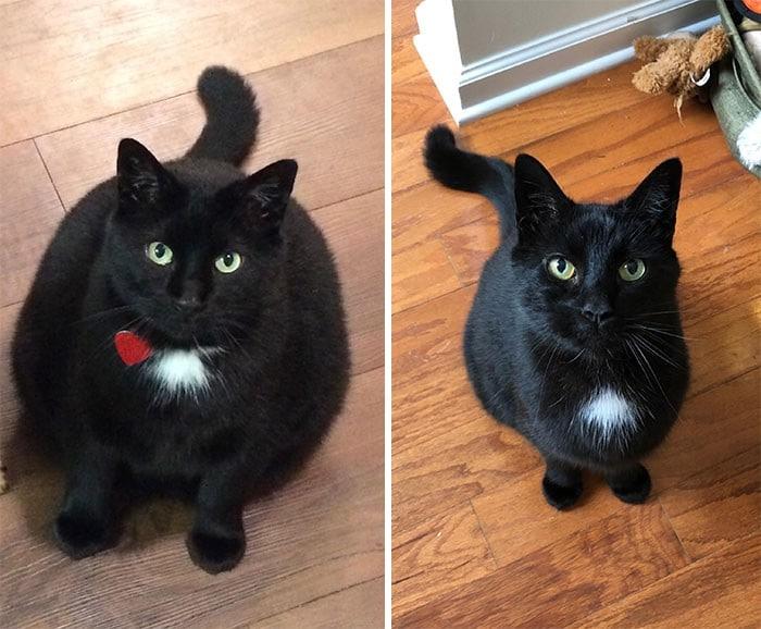 37 impressionantes transformações de perda de peso de gato 38