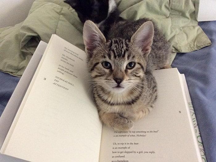 Quando os donos de gatos tentam ler (22 fotos) 5