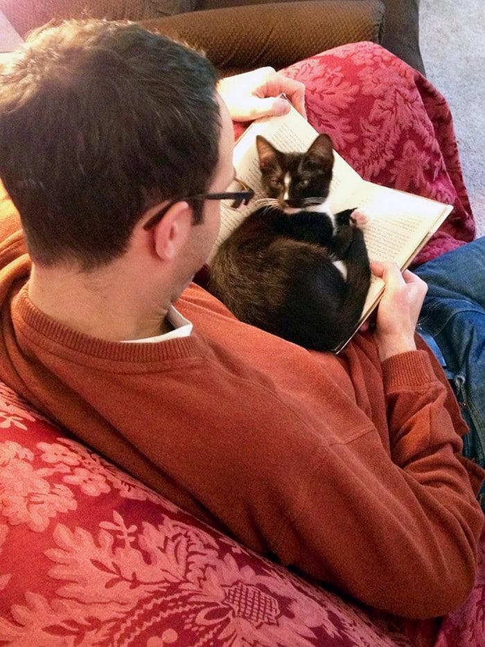 Quando os donos de gatos tentam ler (22 fotos) 9