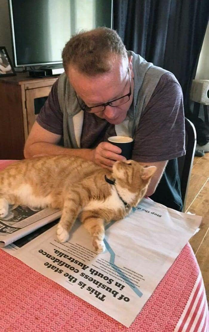 Quando os donos de gatos tentam ler (22 fotos) 11