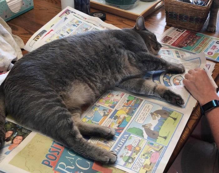 Quando os donos de gatos tentam ler (22 fotos) 13