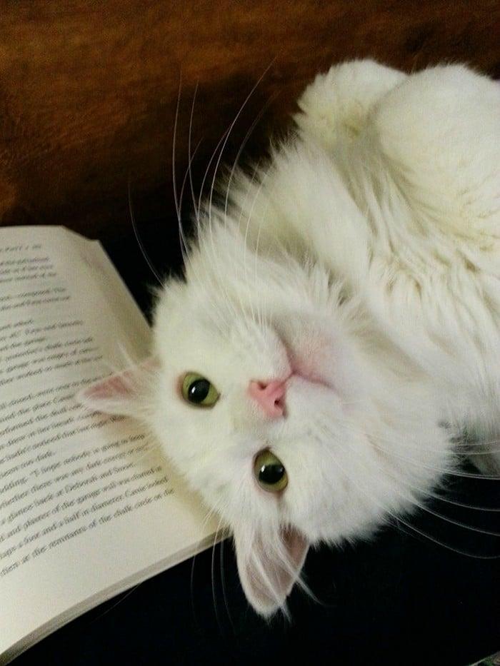 Quando os donos de gatos tentam ler (22 fotos) 18