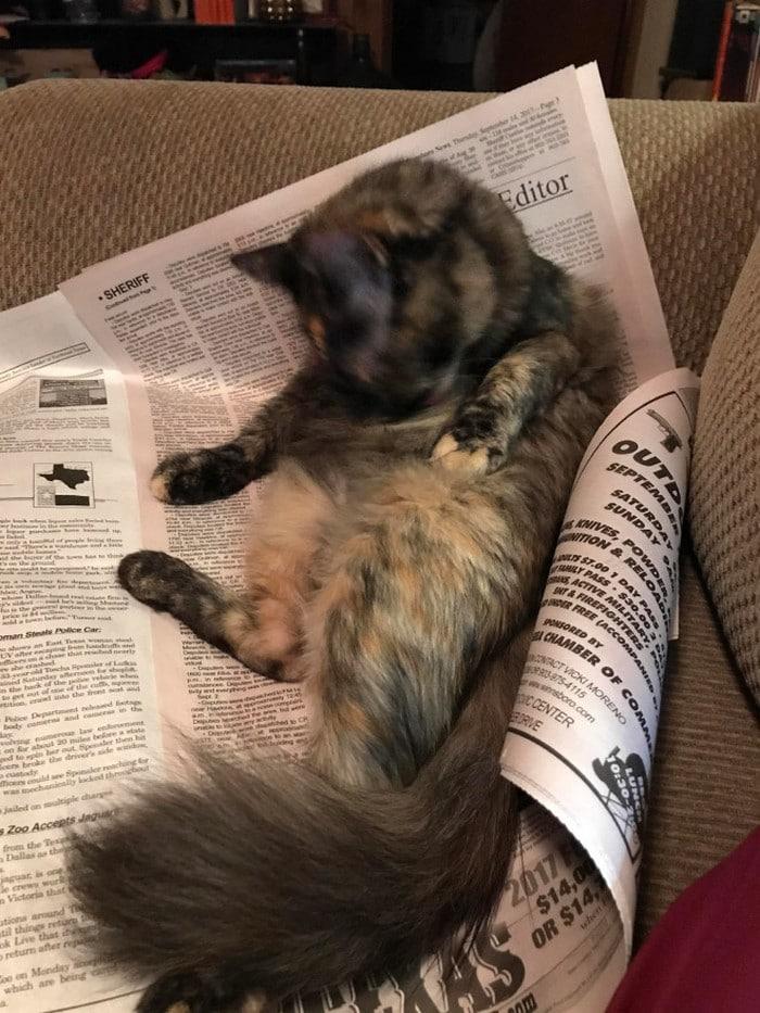 Quando os donos de gatos tentam ler (22 fotos) 23