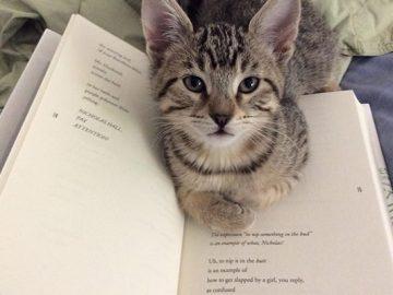 Quando os donos de gatos tentam ler (22 fotos) 16