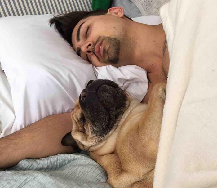 21 animais de estimação que presentearam seus donos com a melhor coisa do mundo, amor incondicional 15