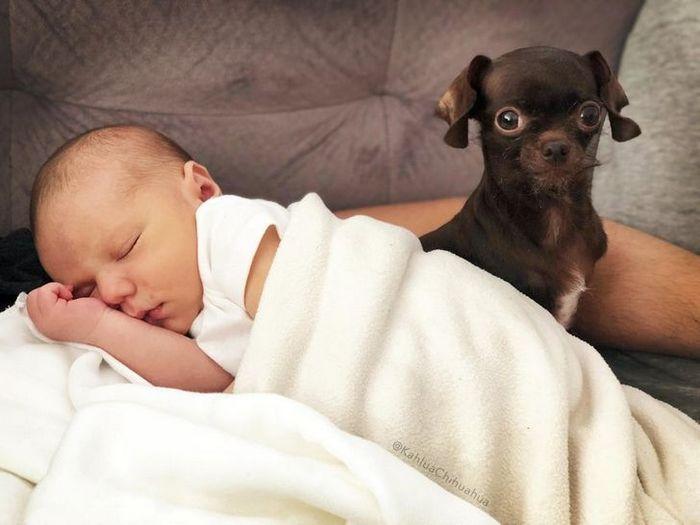 21 animais de estimação que presentearam seus donos com a melhor coisa do mundo, amor incondicional 22