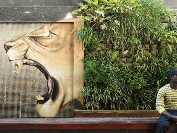 Artista sul-africano pinta grafites incríveis que interagem com o ambiente (32 fotos) 40