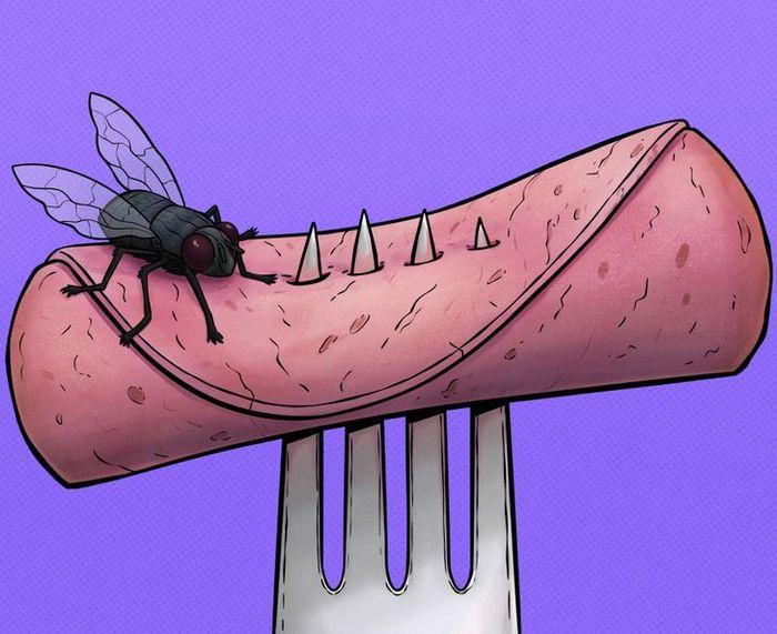 4 coisas que acontece quando uma mosca pousa na sua comida 2