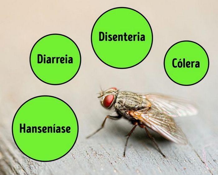 4 coisas que acontece quando uma mosca pousa na sua comida 5