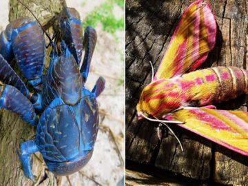 14 falhas da natureza que nos deixam confusos 7