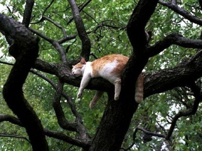 34 gatos que dominam a arte de dormir nas árvores 2