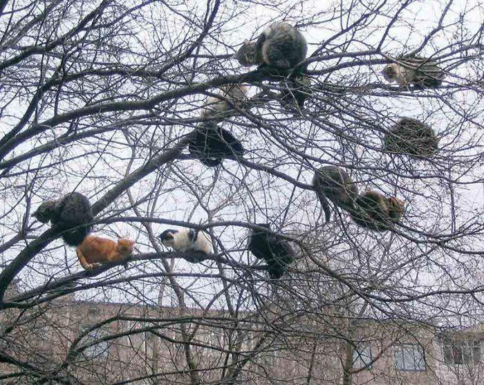 34 gatos que dominam a arte de dormir nas árvores 3