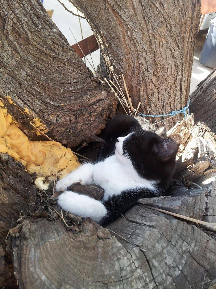 34 gatos que dominam a arte de dormir nas árvores 5