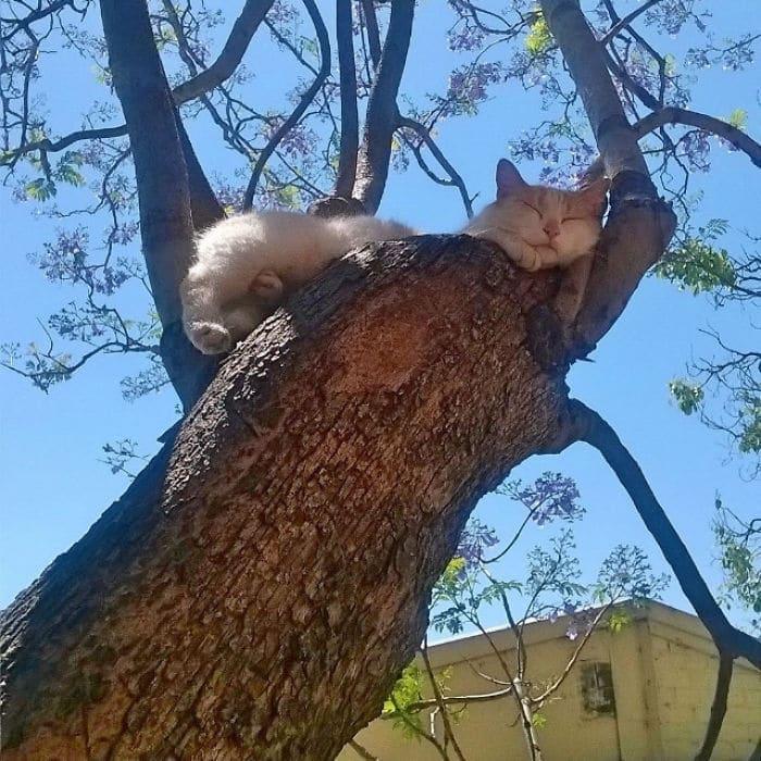 34 gatos que dominam a arte de dormir nas árvores 6