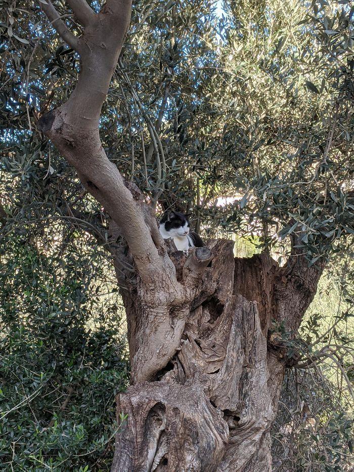 34 gatos que dominam a arte de dormir nas árvores 7