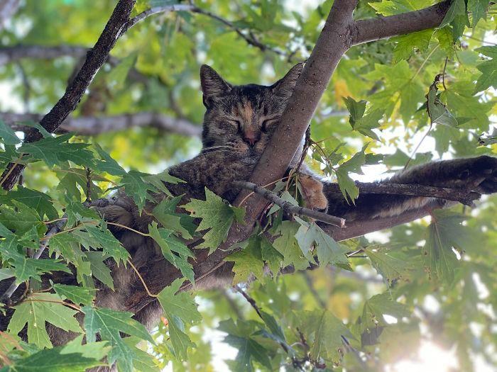 34 gatos que dominam a arte de dormir nas árvores 8