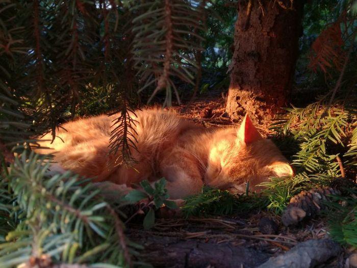 34 gatos que dominam a arte de dormir nas árvores 9