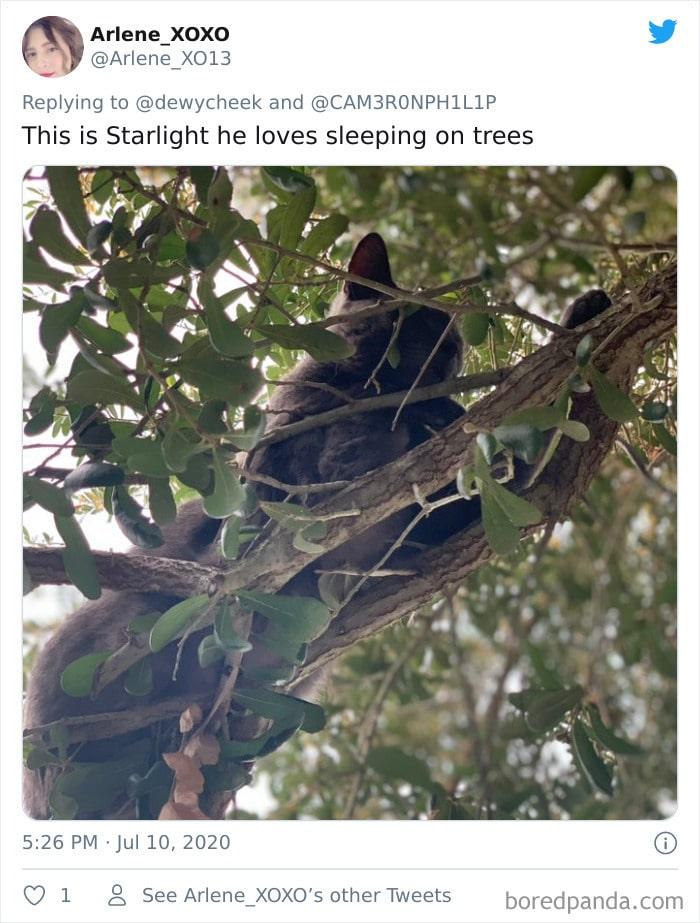 34 gatos que dominam a arte de dormir nas árvores 10