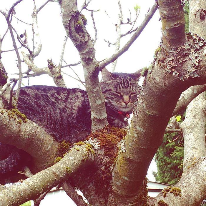 34 gatos que dominam a arte de dormir nas árvores 11