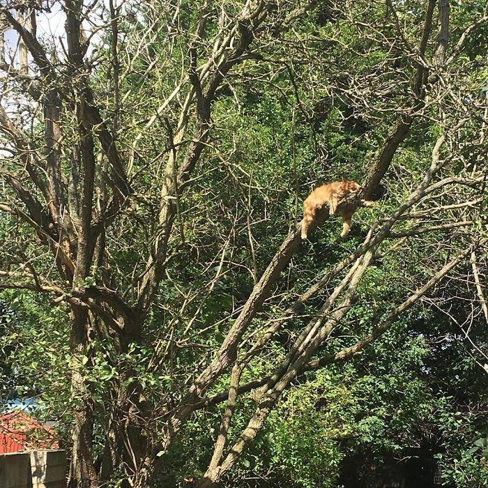 34 gatos que dominam a arte de dormir nas árvores 12