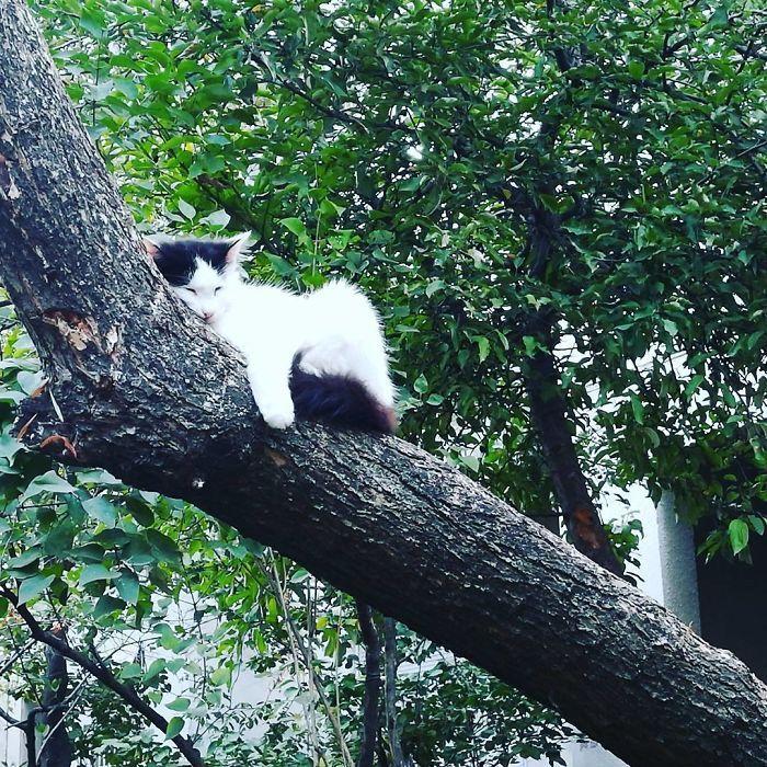 34 gatos que dominam a arte de dormir nas árvores 13