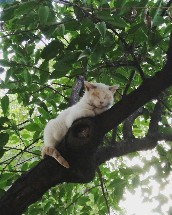 34 gatos que dominam a arte de dormir nas árvores 14