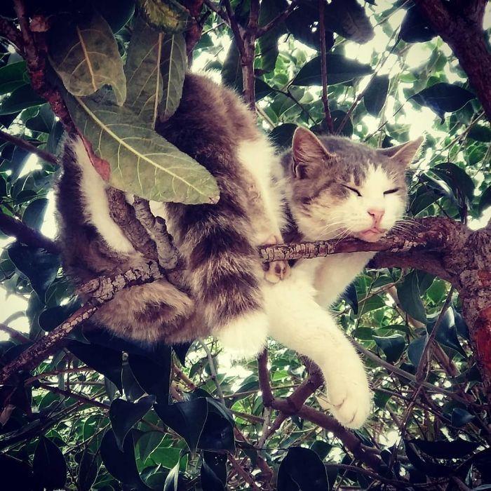 34 gatos que dominam a arte de dormir nas árvores 16