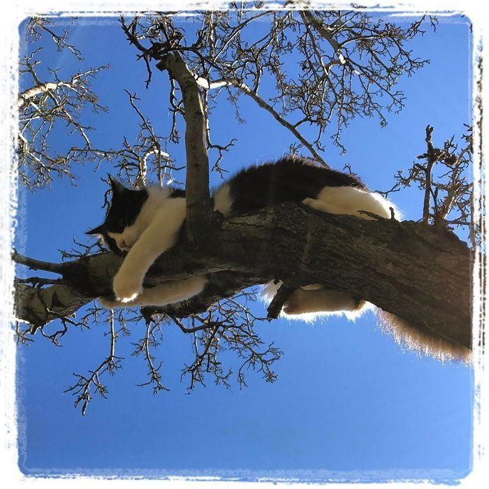 34 gatos que dominam a arte de dormir nas árvores 17