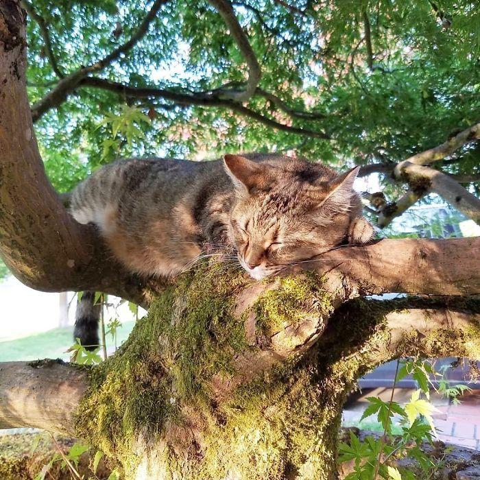 34 gatos que dominam a arte de dormir nas árvores 18