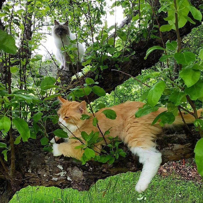 34 gatos que dominam a arte de dormir nas árvores 19
