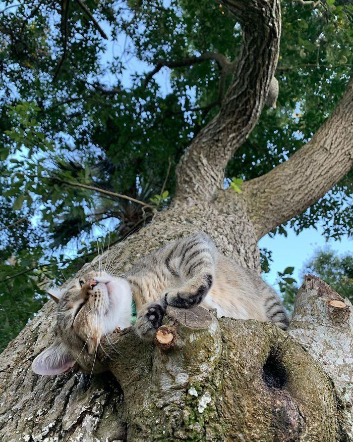 34 gatos que dominam a arte de dormir nas árvores 20