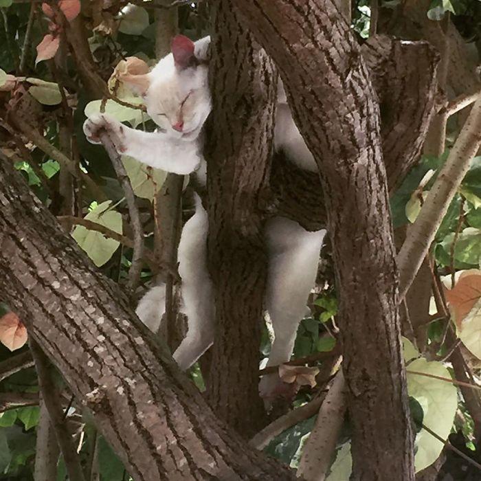 34 gatos que dominam a arte de dormir nas árvores 21