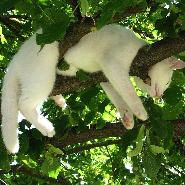 34 gatos que dominam a arte de dormir nas árvores 23