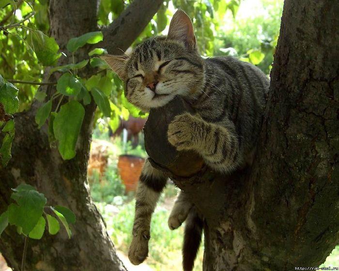 34 gatos que dominam a arte de dormir nas árvores 25