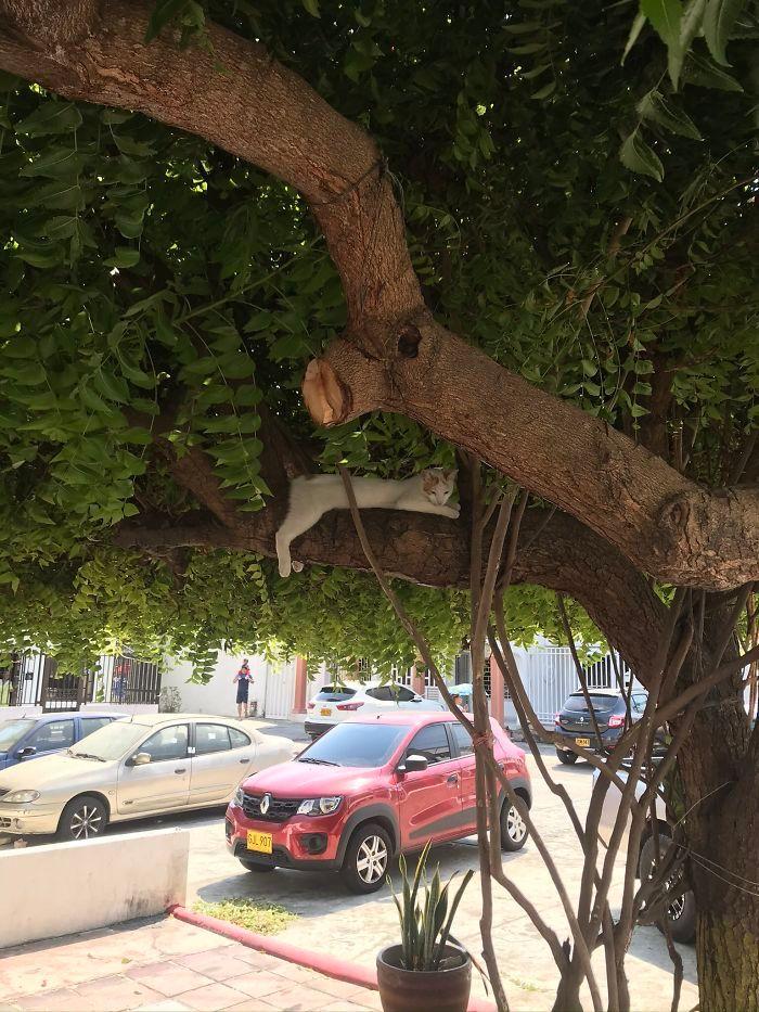 34 gatos que dominam a arte de dormir nas árvores 27