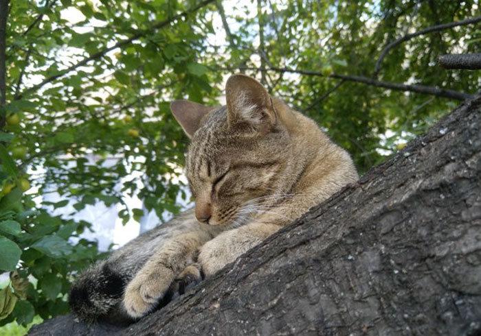 34 gatos que dominam a arte de dormir nas árvores 28