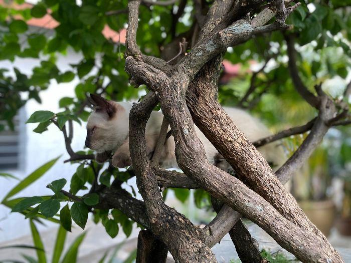 34 gatos que dominam a arte de dormir nas árvores 29