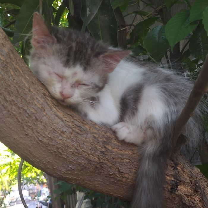 34 gatos que dominam a arte de dormir nas árvores 30