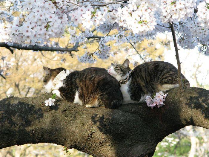 34 gatos que dominam a arte de dormir nas árvores 32