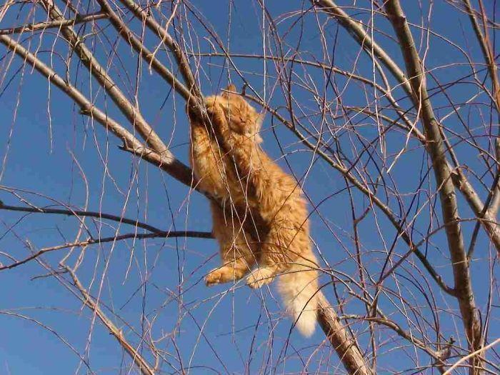 34 gatos que dominam a arte de dormir nas árvores 33