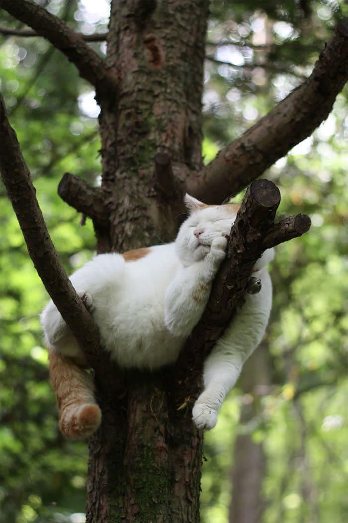 34 gatos que dominam a arte de dormir nas árvores 35