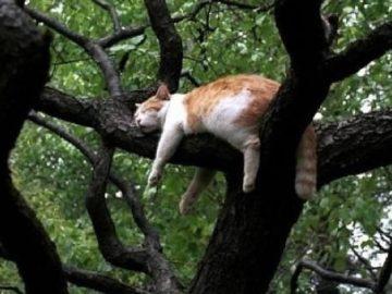 34 gatos que dominam a arte de dormir nas árvores 34