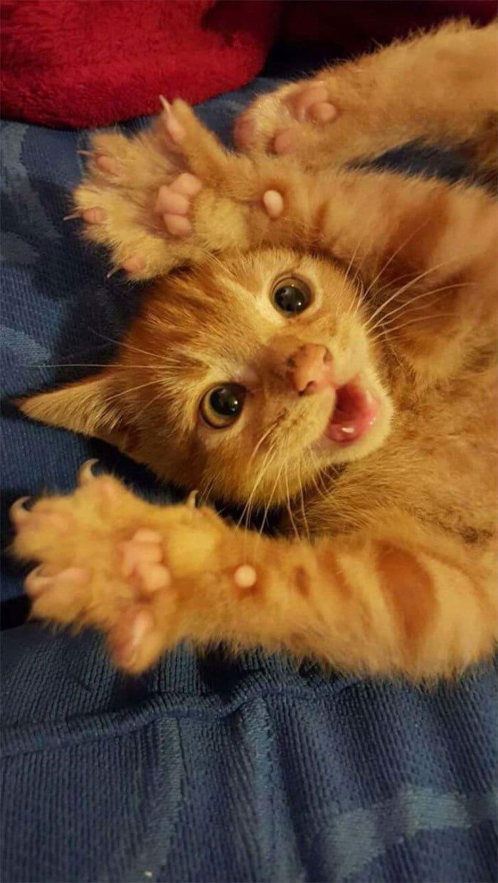 O grupo Murder Mittens é sobre gatos mostrando suas garras (35 fotos) 2