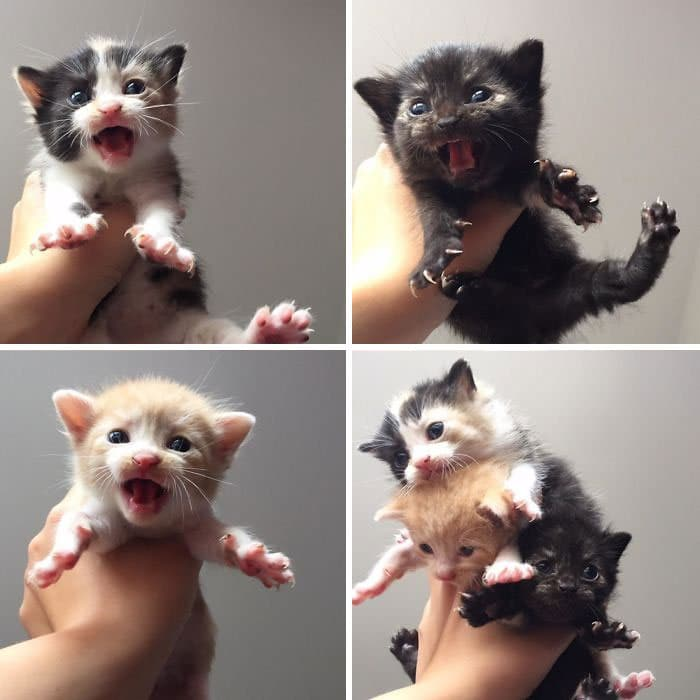 O grupo Murder Mittens é sobre gatos mostrando suas garras (35 fotos) 3