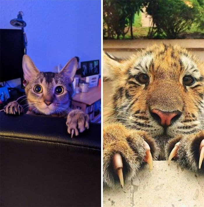 O grupo Murder Mittens é sobre gatos mostrando suas garras (35 fotos) 5
