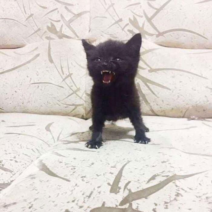 O grupo Murder Mittens é sobre gatos mostrando suas garras (35 fotos) 7