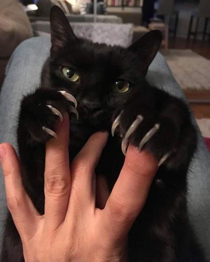 O grupo Murder Mittens é sobre gatos mostrando suas garras (35 fotos) 8
