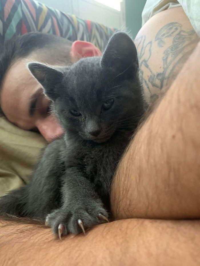 O grupo Murder Mittens é sobre gatos mostrando suas garras (35 fotos) 9